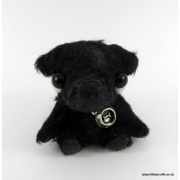 blackpug
